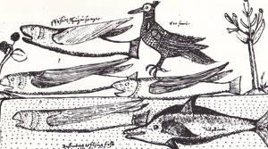 Francis Fletcher, präst och läkare ombord på Pelikanen, ritade av märkliga djur och inkluderade i sin egen rapport från resan.